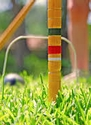 Celebrate the 1st Day of Spring! Croquet on the Lawn