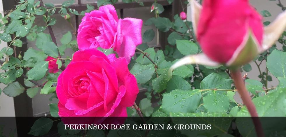 perkinson-rose-garden.jpg